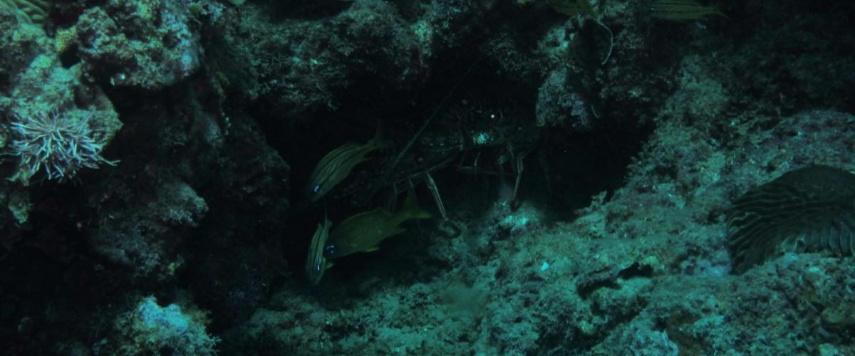 sosua-snorkeling-003