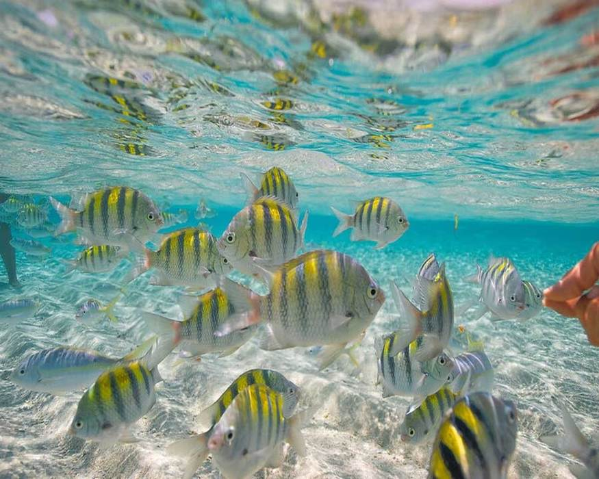 Beautiful white and yellow Fish Bank at Paradise Island shore (Cayo Levantado, Cayo Arena) - Marysol Tours