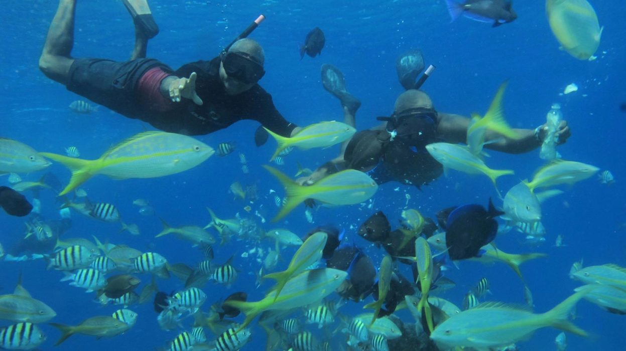 Sosua Beach Tour Snorkeling - Marysol Tours